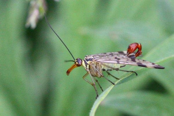 Интересные создания природы и факты о них