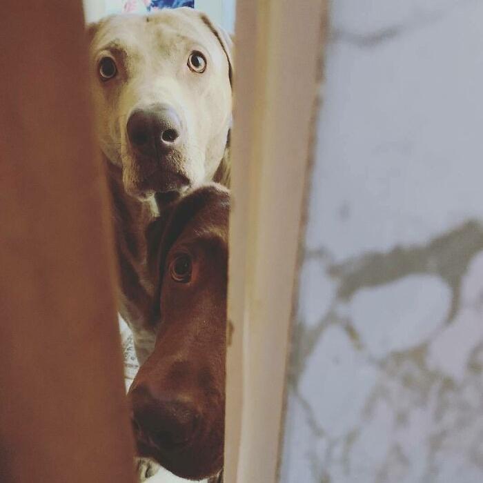 Любопытные собачьи носы, мимо которых трудно пройти незамеченным