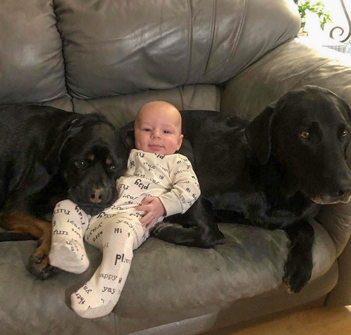 Почему в доме, где растёт ребёнок, должна быть собака