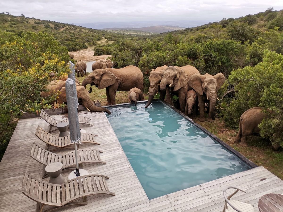 Стадо слонов приходит освежиться к бассейну в ЮАР