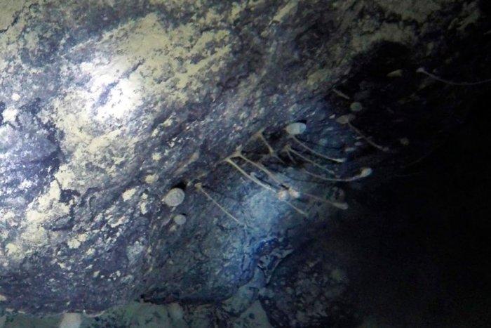 Что обнаружили ученые под шельфовым ледником Антарктиды?