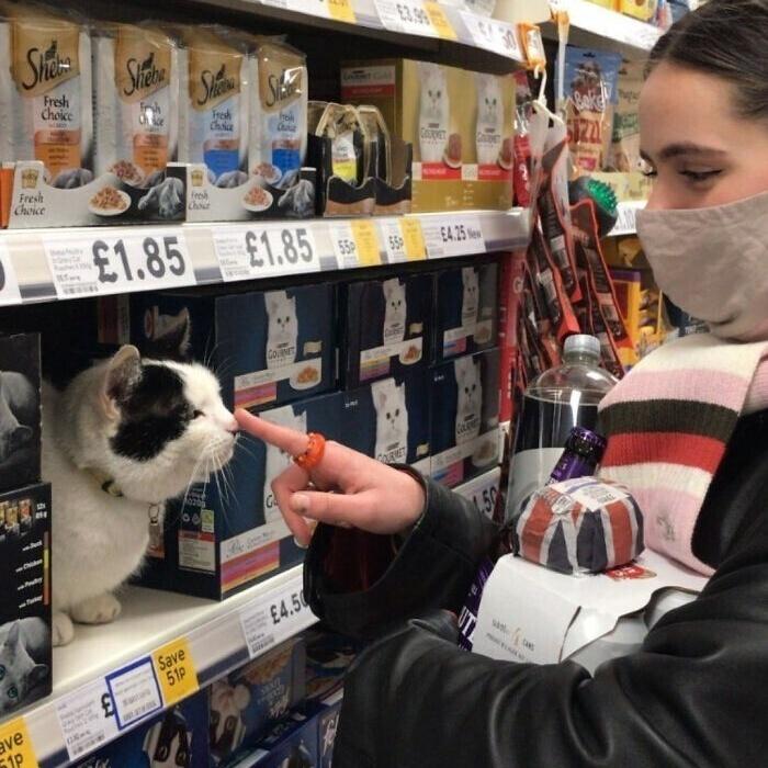 Котики, которые находятся в самых неожиданных местах