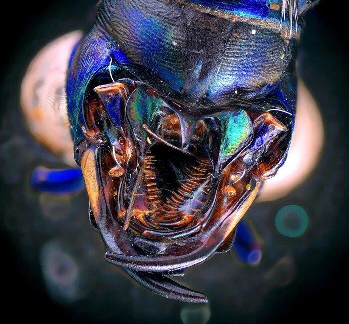 Невероятные снимки живых существ под микроскопом