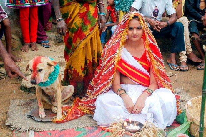 Почему в Индии женятся и выходят замуж за собак?