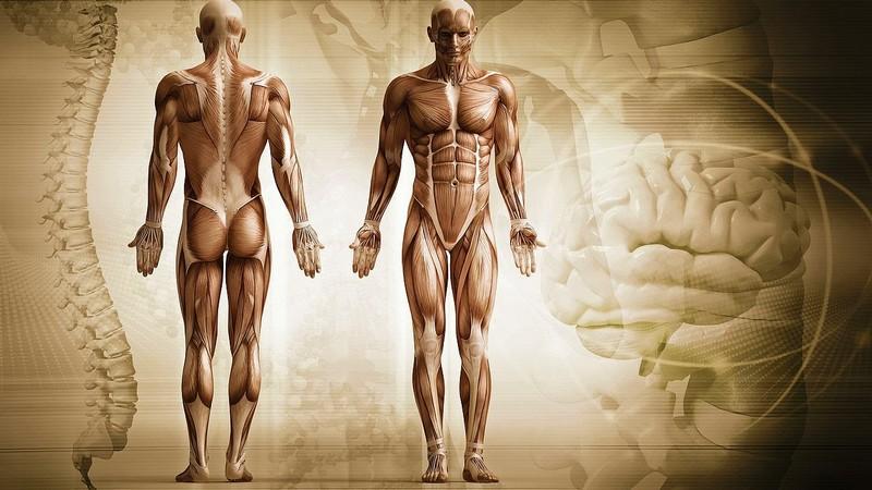 Странные и интересные факты о человеческом теле
