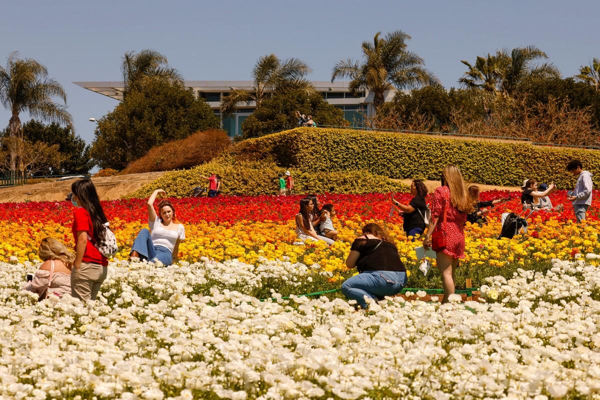 Яркие цветочные поля Карлсбада на снимках