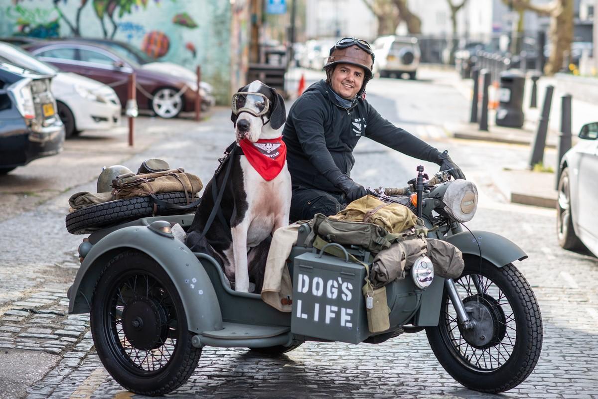 Датский дог Диего любит кататься в коляске мотоцикла