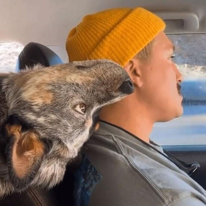 Иногда собаки ломаются и им нужна перезагрузка