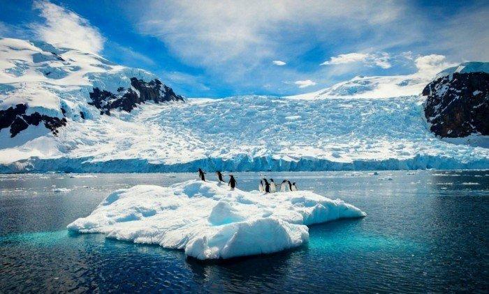 Что учёным удалось найти во льдах Антарктиды за 50 лет?