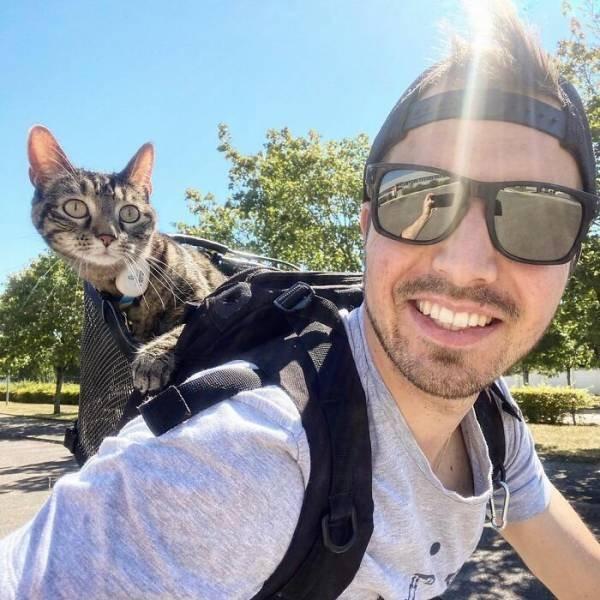 Кошка Катод обожает везде путешествовать со своим хозяином