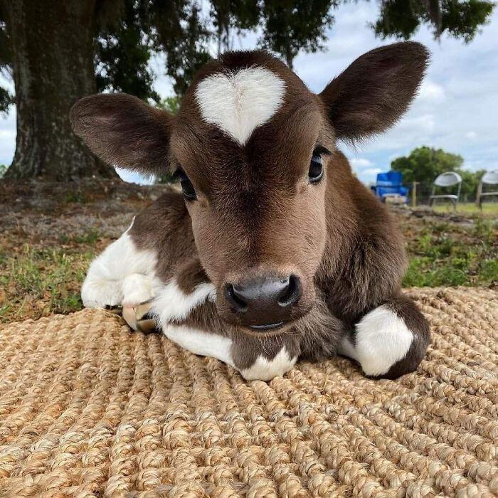 Милые и забавные животные, которые заряжают позитивом