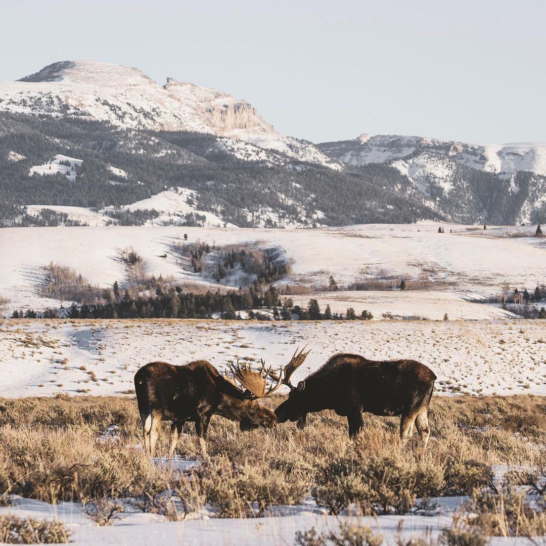 Природа и животные штата Вайоминг на снимках Ника Зульцера