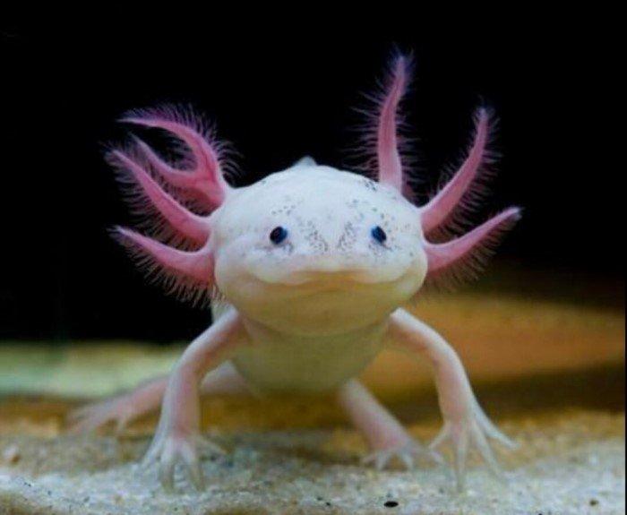 Реальные животные мира, которые похожи на инопланетян