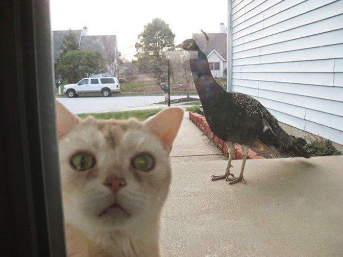 Снимки забавных животных, которым позарез необходимо внутрь