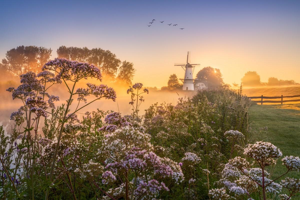 Волшебная весна в Нидерландах от фотографа Альберта Дроса