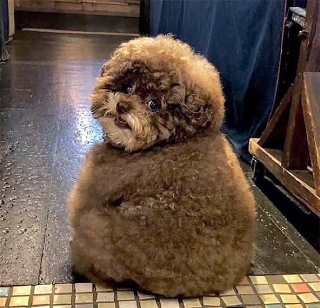 Фотографии самых круглых в мире животных