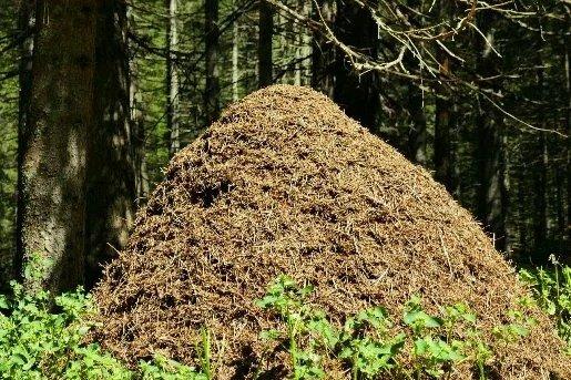 Про удивительное устройство муравьиного общества
