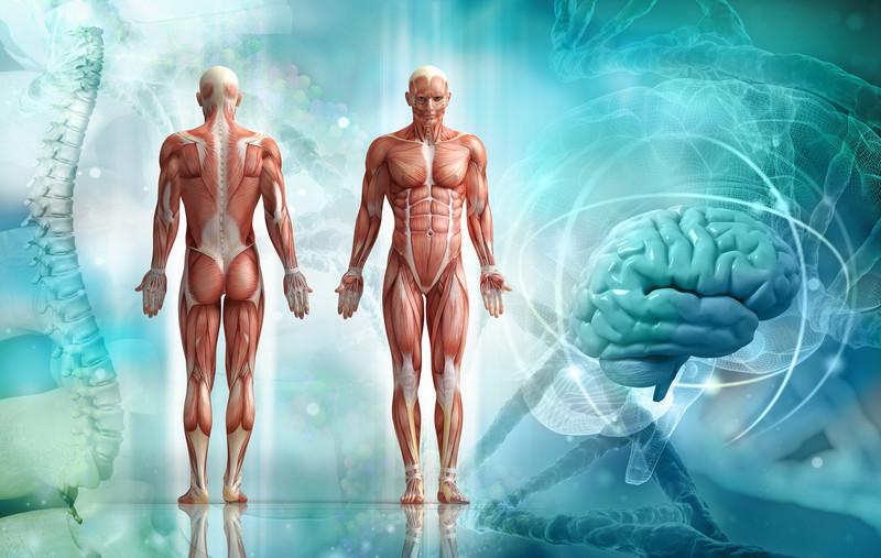 Распространённые заблуждения о человеческом теле