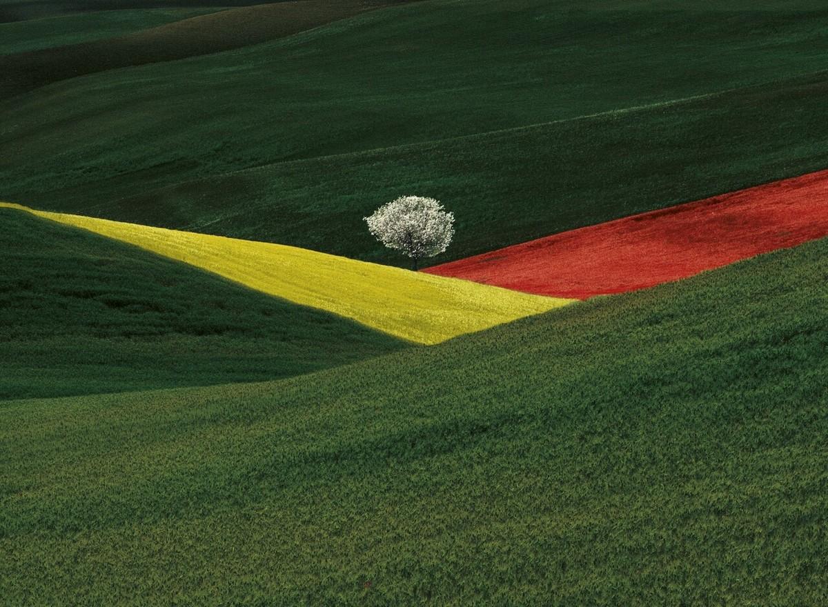Универсальная гармония пейзажа на снимках Франко Фонтана