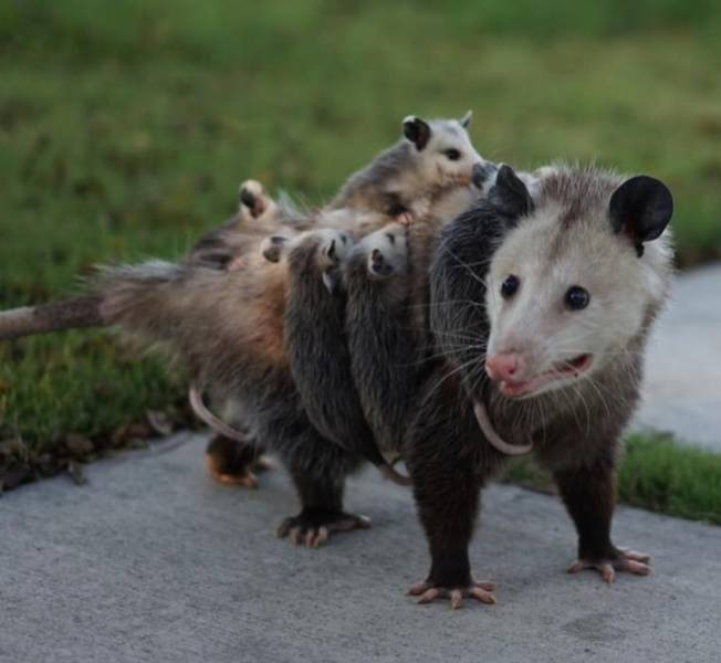 Животные познают все радости материнства на снимках