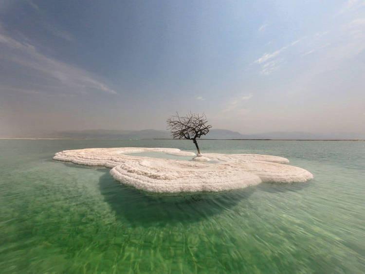 Дерево жизни — одинокое растение посреди Мертвого моря