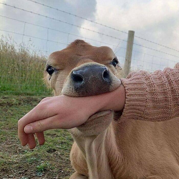 Милые и забавные животные заряжают позитивом на снимках