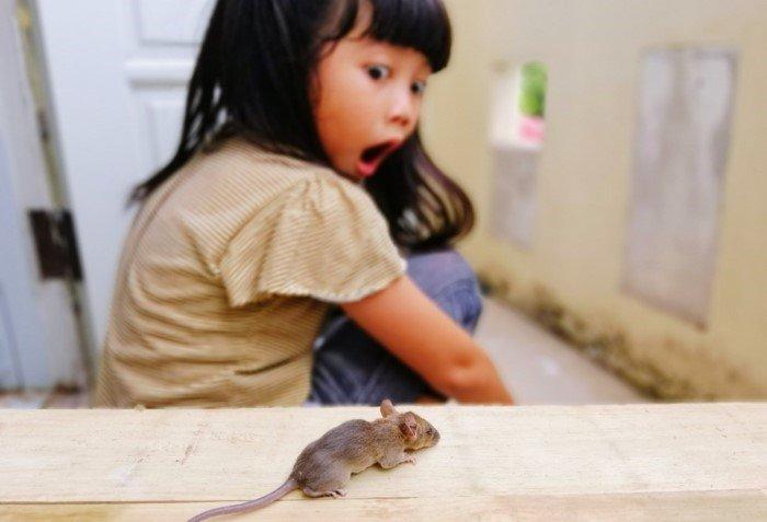 Почему девушки больше боятся мышей?