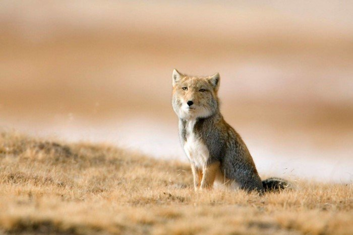 Самые необычные животные мира
