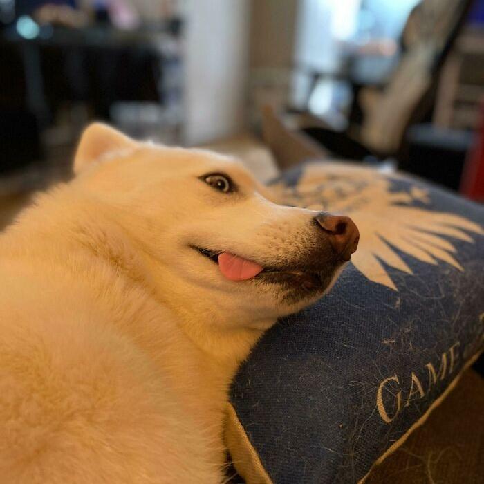 Забавные и милые собаки, которые поднимают настроение