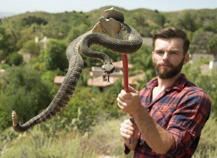 Гремучие змеи используют слуховую иллюзию, чтобы обмануть человеческий мозг