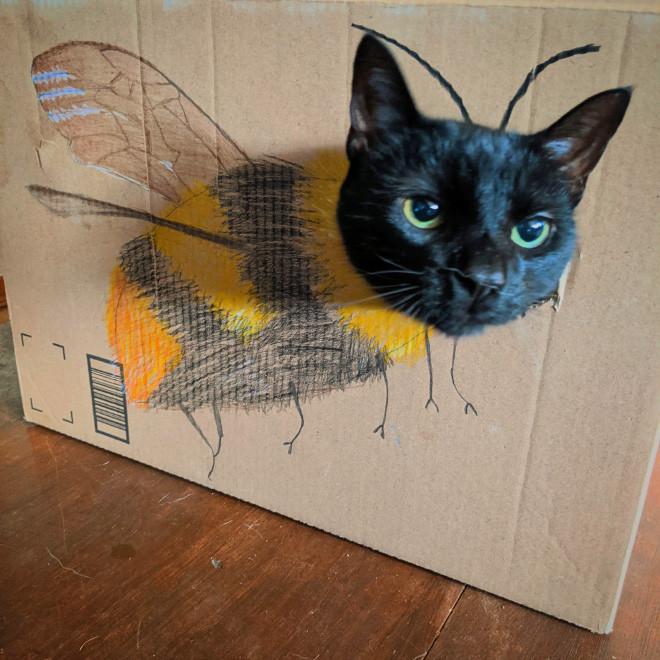 Картон и кошки вместе принимают разные образы