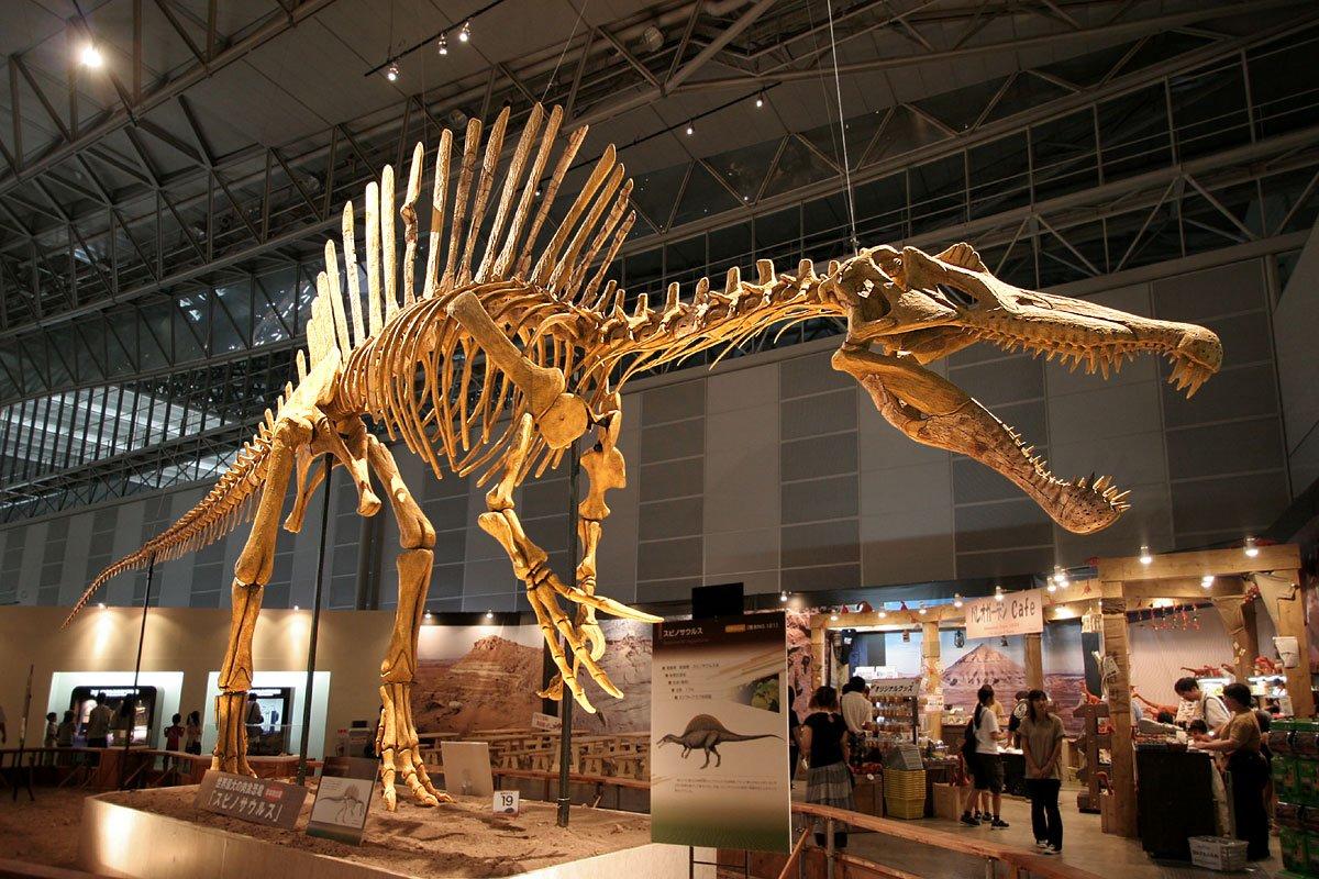 Кости динозавров — совсем даже не кости?