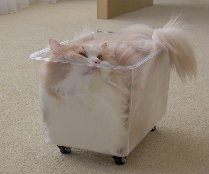Подборка забавных фотографий «жидких» и очень милых котиков