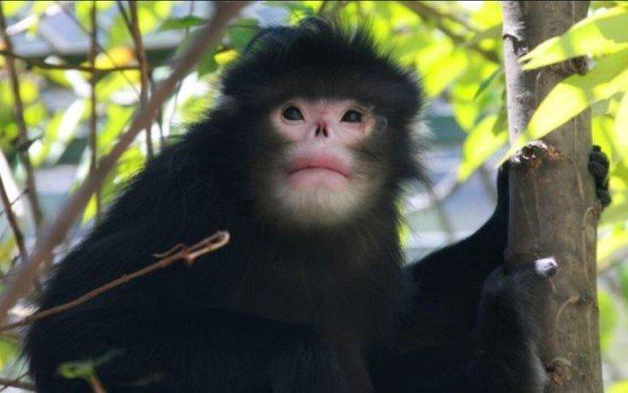 Пять новых удивительных животных, которых нашли учёные за последние 20 лет
