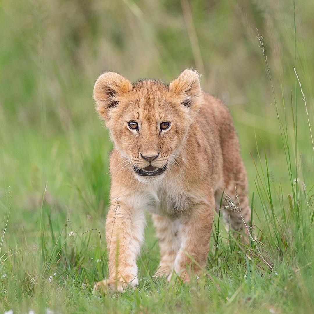 Красивые дикие животные на снимках Дика Ван Дуйна
