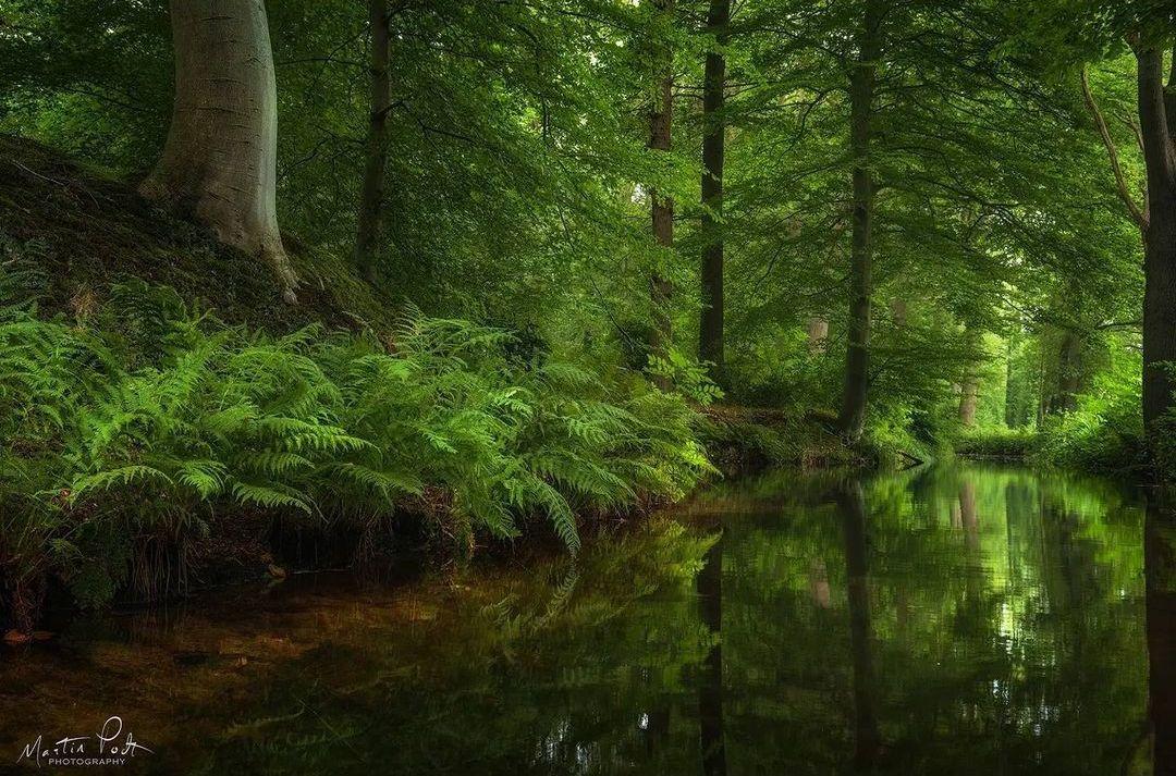 Сказочный лес на снимках Мартина Подта